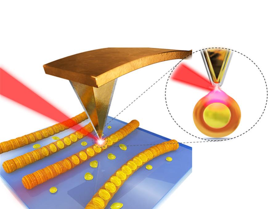 광유도력현미경의 측정원리 모식도