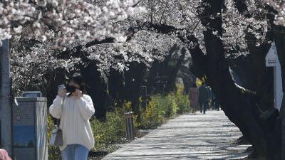 """'벚꽃 감염 방지' 여의도 한강공원 주차장·여의서로 폐쇄...""""그늘막도 단속"""""""