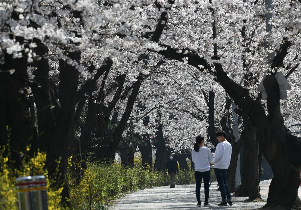 [프리즘]코로나19와 봄
