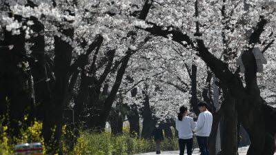 코로나19와 봄