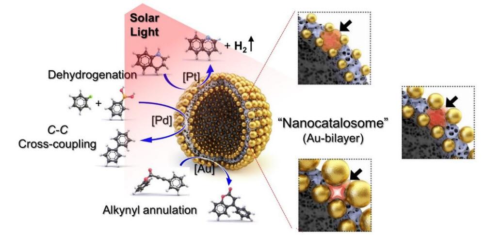 나노카탈라좀을 이용한 태양광 유도 화학반응 개념도