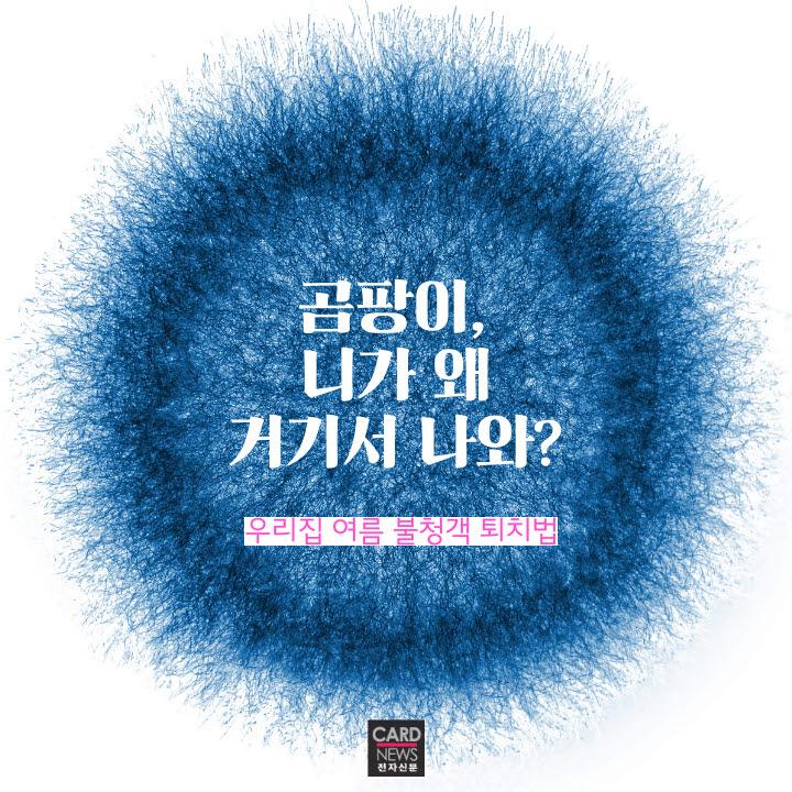 [카드뉴스]여름 불청객 곰팡이 퇴치법