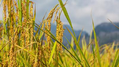 농식품부, 농지현황 기록 관리한 농지원부 일제 정비