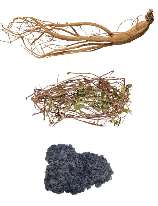문한의학연이 면역관문 차단 효능을 확인한 한약재. 위에서부터 하래로 인삼, 현초, 건칠.