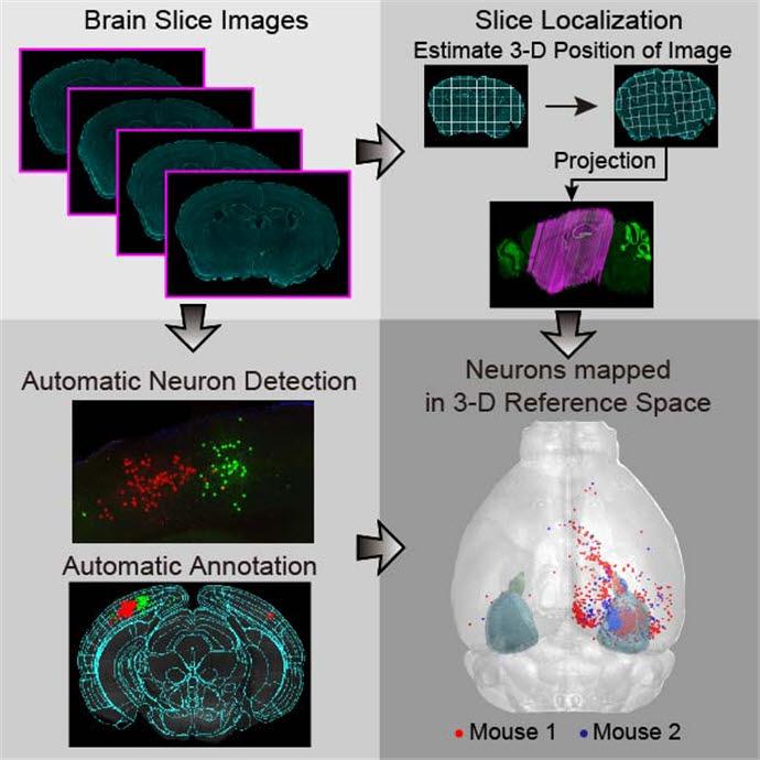 뇌 절편 데이터 위치 정보를 계산하고 형태를 보정해 표준화된 3차원 지도에 투영하는 기술 모식도