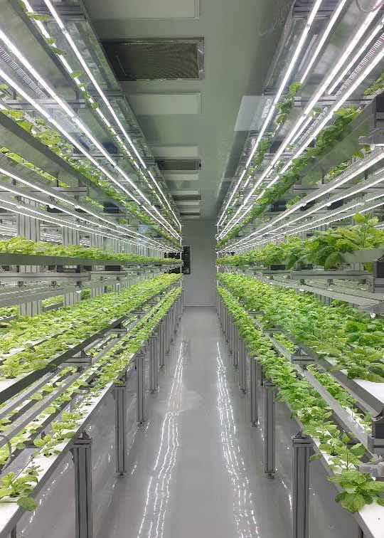 담배과 식물 일종인 니코티아나 벤타미아나를 재배하는 바이오앱의 밀폐형 식물공장 내부 (사진=한미사이언스)