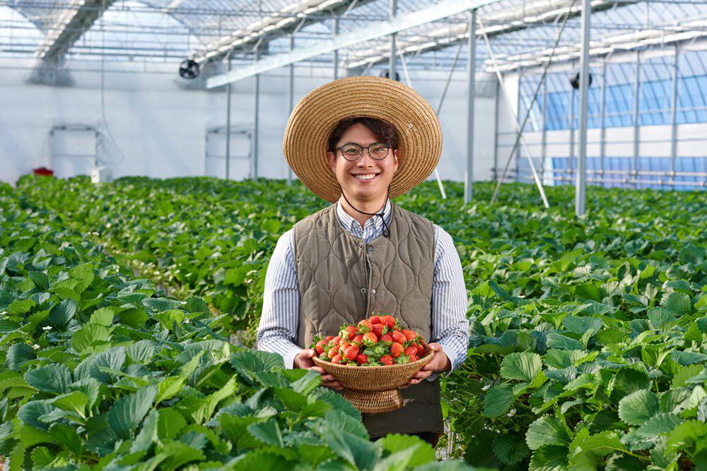 스마트팜 딸기농장