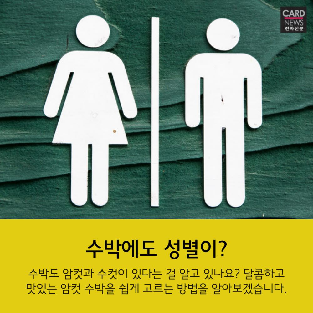 [카드뉴스]달콤 아삭 '암컷수컷'…딱 보면 압니다
