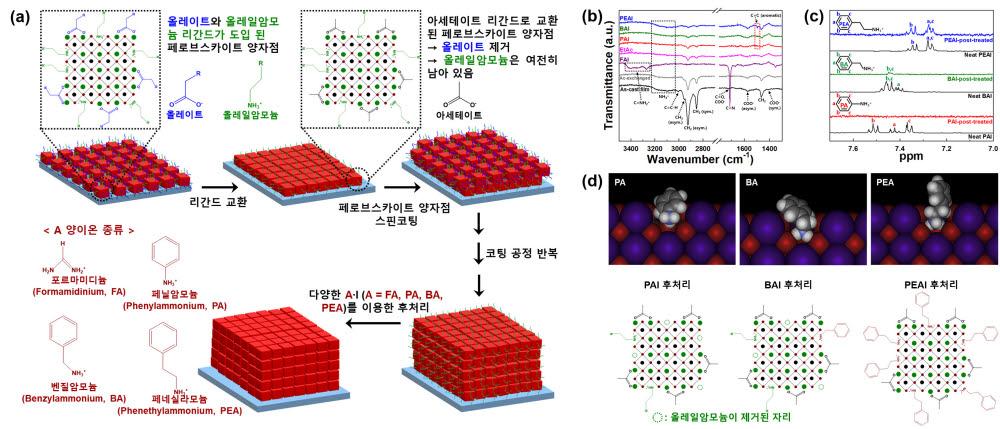 페네실라모늄(PEA)리간드를 페로브스카이트 양자점에 도입한 데이터 모식도