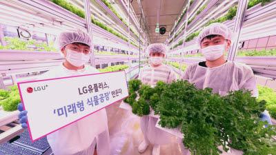 LG유플러스 '미래형 식물공장' 만든다