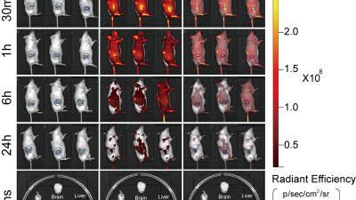 GIST, 효능 높이고 부작용 줄인 암 진단·치료 물질 개발