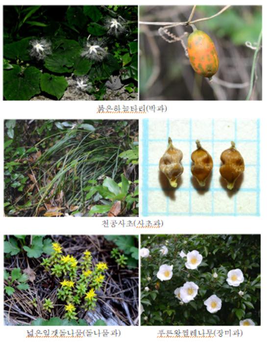 국립생물자원관, 미기록 식물 발견 최대 지역은 제주도