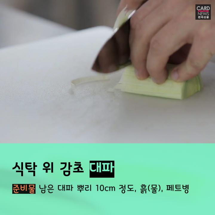 [카드뉴스]금값 채소, 집에서 키워 먹는다