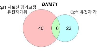생명연, 신규 유전자 가위 성능·정확성 첫 입증
