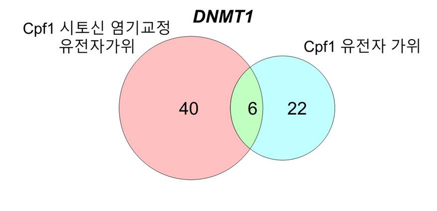 Cpf1 시토신 염기교정 유전자가위와 Cpf1 유전자 가위의 비표적 위치 비교