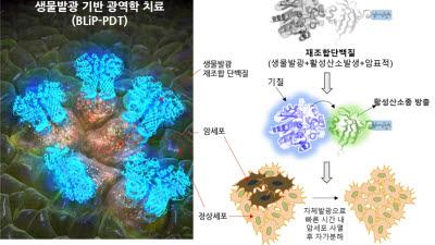 KBSI, 스스로 빛 내는 단백질로 암세포 사멸 기술 개발
