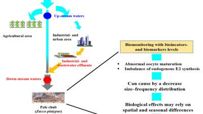 KIT, '피라미' 이용 지역 생태독성 평가 모니터링 기법 확립