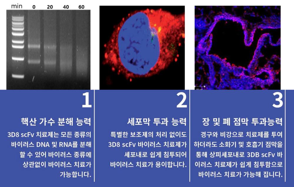 3D8 scFv 3대 주요 특징, 자료=성균관대
