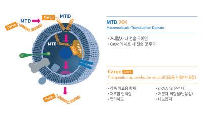 프로셀테라퓨틱스, 세포 내 전송 기술로 혁신치료제 패러다임 바꾼다