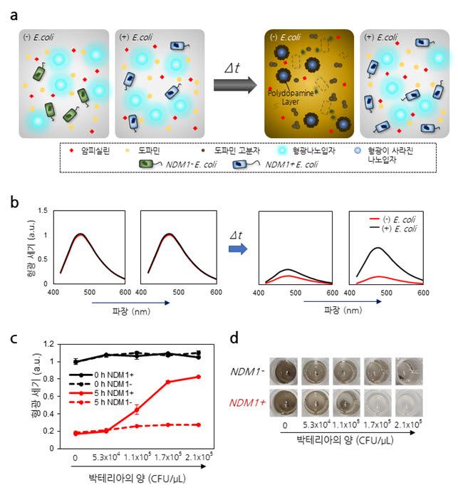 도파민 센서를 이용한 박테리아의항생제 내성 검출 원리 설명 모식도