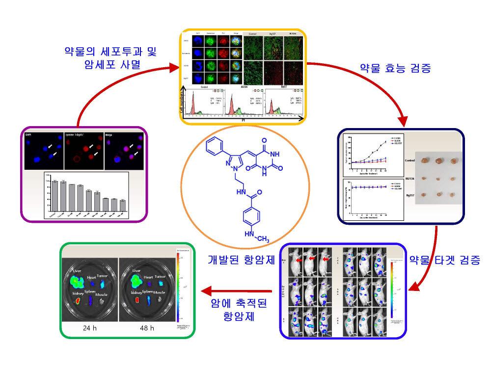 단백질 3차원 구조를 기반으로 설계된 항암제 및 항암효과 설명 이미지