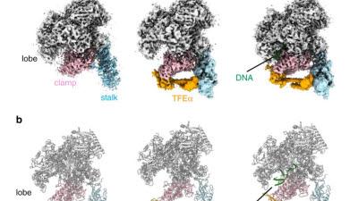 KBSI, 초저온전자현미경으로 유전자 발현 메커니즘 규명