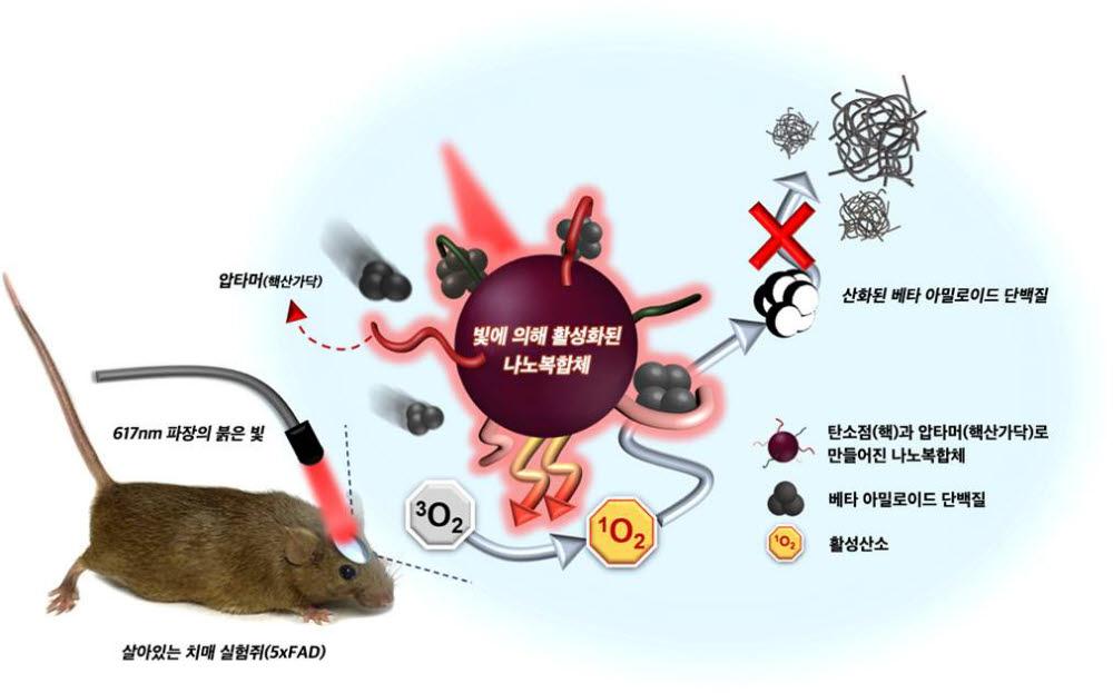 나노복합체가 아밀로이드 플라크 형성을 억제하는 과정. 사진출처=한국기초과학지원연구원