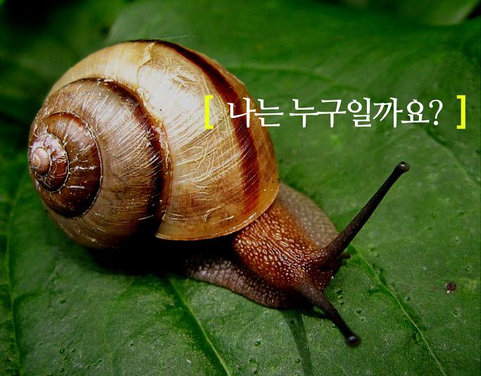 동물의 특징을 담은 영상 나는 누구일까요 ? 달팽이 편 이미지, 자료=아이스크림미디어 제공
