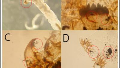 지역 정수장 5곳서 깔따구 유충 발견