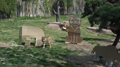 LG전자, 가전 포장재 동물원에 기부...동물들 장난감으로 활용