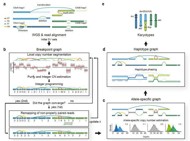 유전 변이 발굴 및 유전체 복원 알고리즘 (InfoGenomeR)의 개략도.