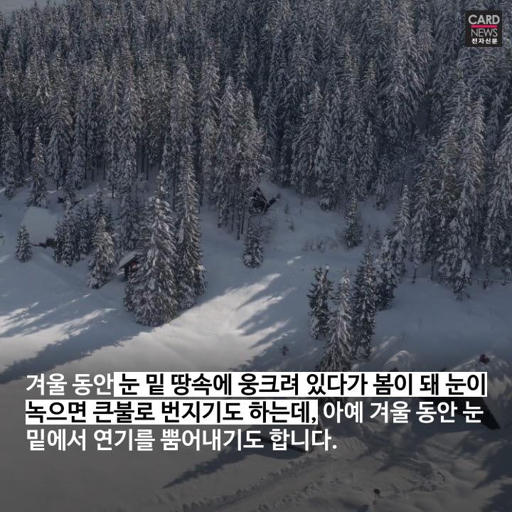 [카드뉴스]죽지 않는 불씨 '좀비 화재'