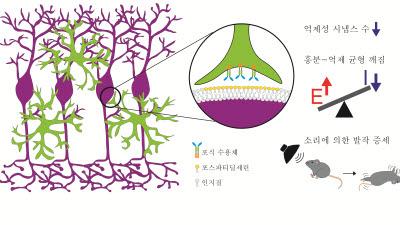 KAIST, 신경세포 흥분성 뇌질환 기전 규명...새로운 치료전략 제시
