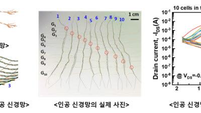 KIST, 뇌신경세포망 모사 인공섬유소자 개발...지능형 웨어러블·로보틱스 활용 기대