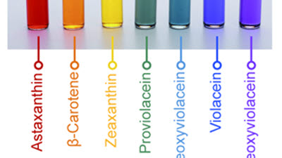 KAIST, 미생물 이용한 천연 무지개 색소 생산 기술 최초 개발