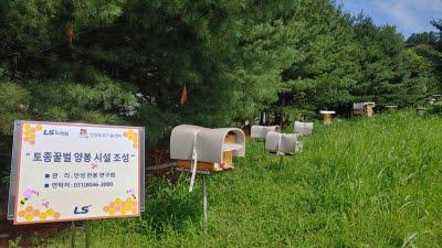 LS, 안성 그룹 연수원서 토종 꿀벌 양봉