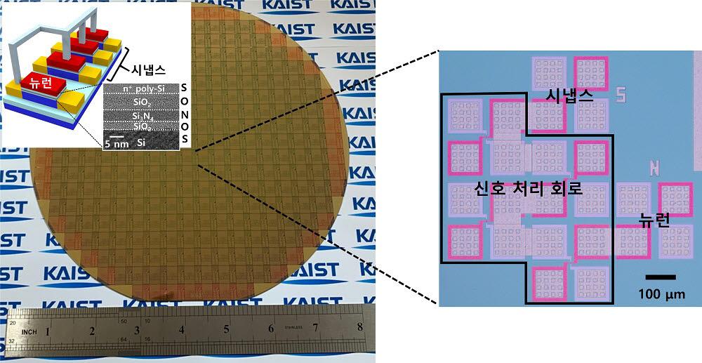 상용화된 CMOS 공정으로 제작된 단일 트랜지스터 기반 뉴런과 시냅스.