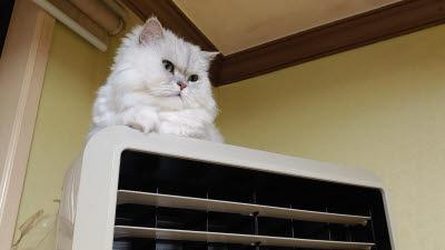 에어컨 위의 고양이