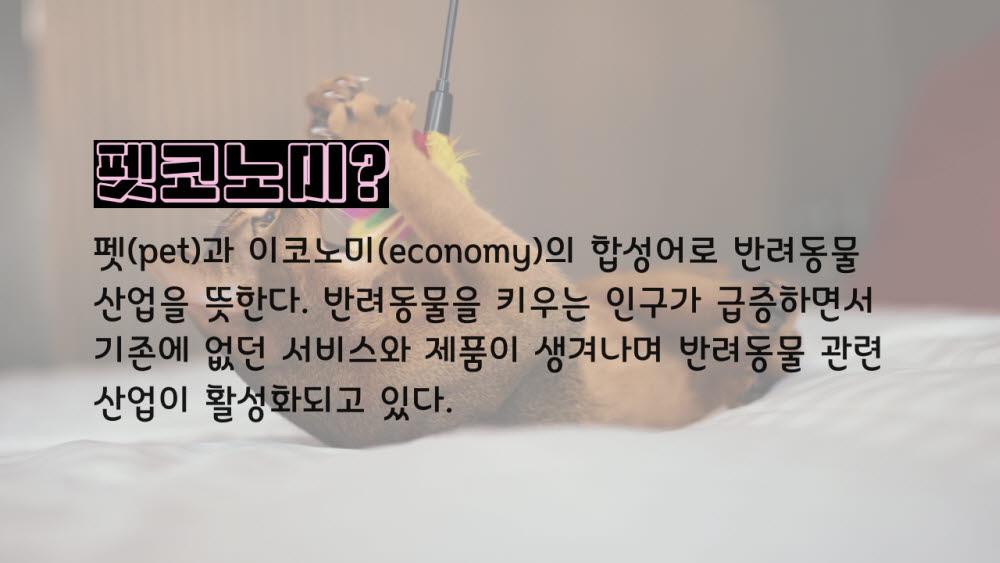 [카드뉴스]댕냥이 전성시대, 펫코노미가 뜬다