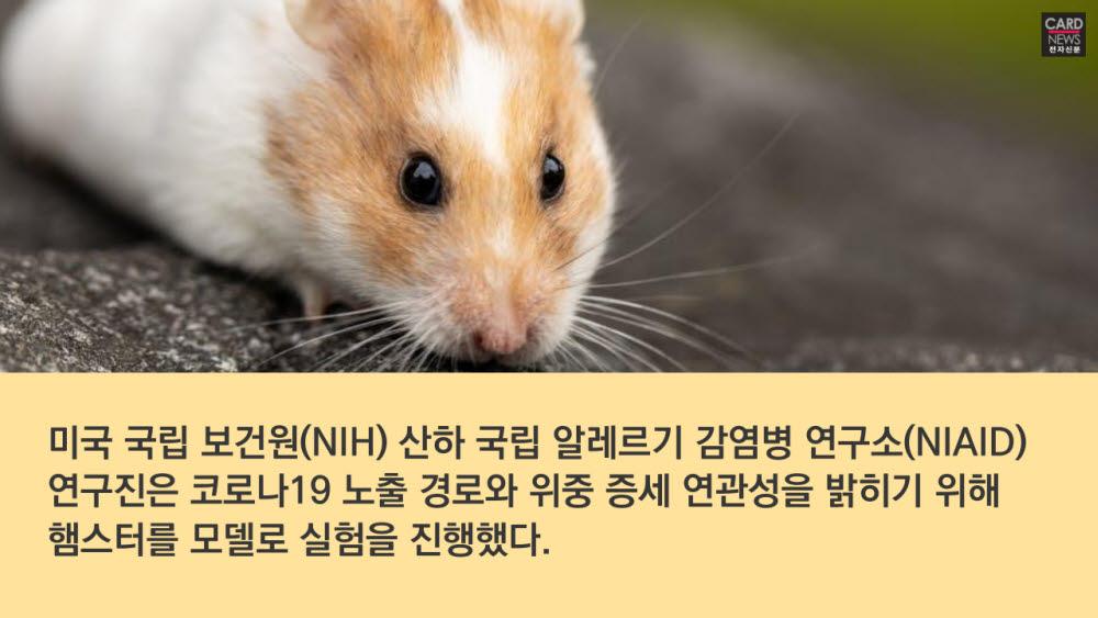 [카드뉴스]비말 감염 비밀 풀렸다…마스크가 '명약'