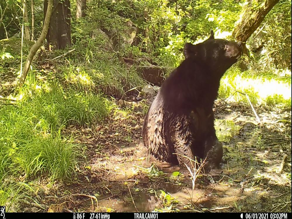 진흙목욕하는 반달가슴곰