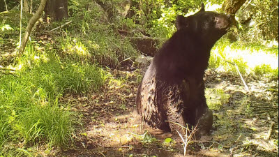 곰이 진흙 목욕하고 삵이 산책하는 지리산