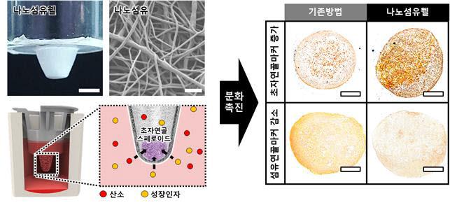 나노섬유웰을 통한 줄기세포 스페로이드의 초자연골로의 분화를 촉진하는 개념도.