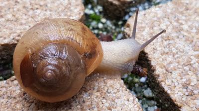달팽이와 나