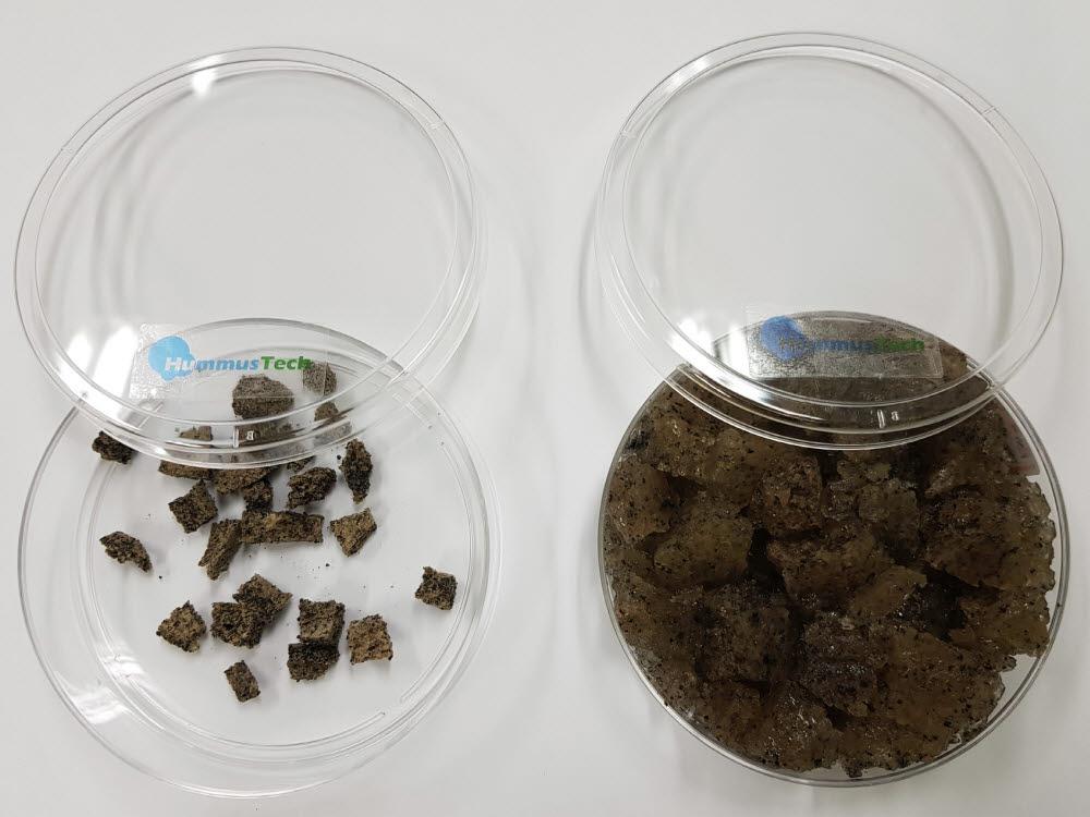 방사선이용 생분해성 바이오매스 함유 하이드로겔제조기술을 이용해 생산한 토양보습제가 물을 흡수한 전후 모습.